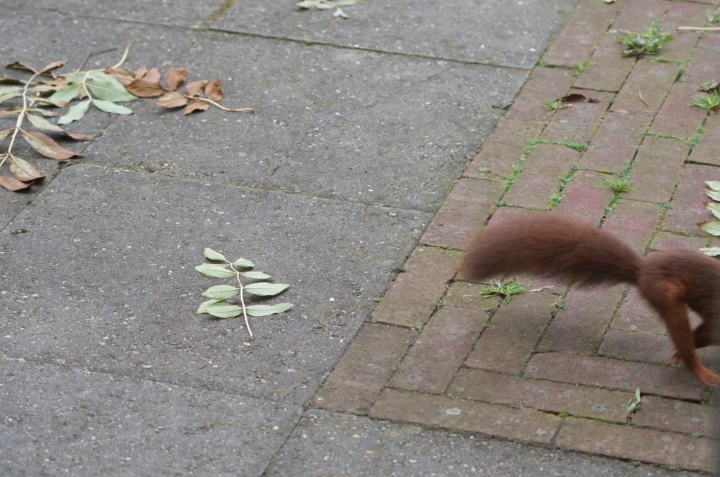 bijna eekhoorn